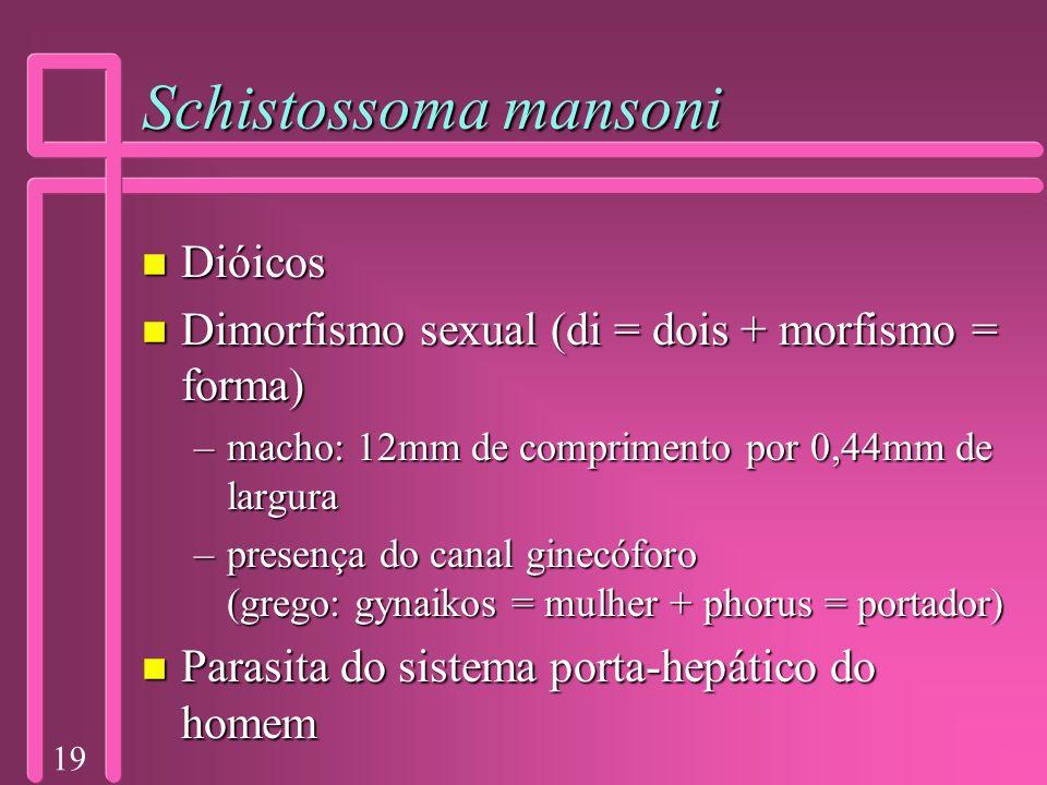 Schistossoma mansoni Dióicos
