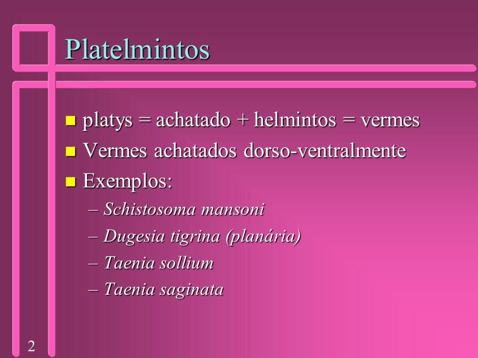Platelmintos platys = achatado + helmintos = vermes