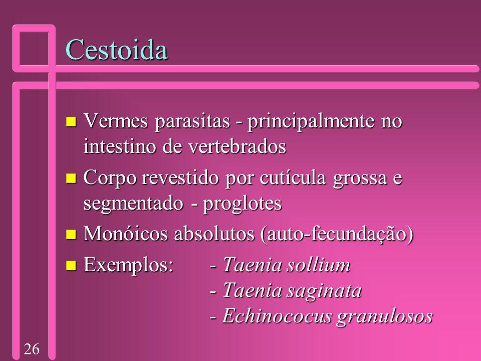 Cestoida Vermes parasitas - principalmente no intestino de vertebrados