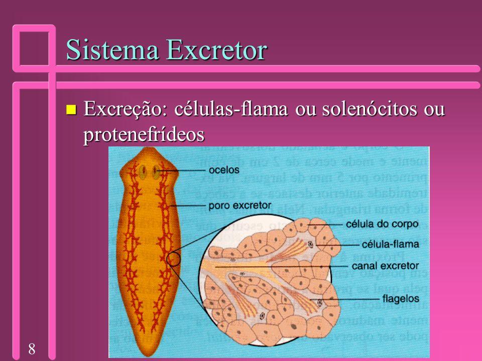 Sistema Excretor Excreção: células-flama ou solenócitos ou protenefrídeos