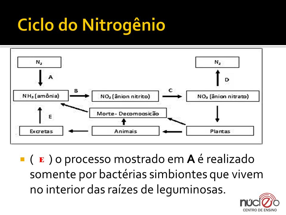 Ciclo do Nitrogênio ( ) o processo mostrado em A é realizado somente por bactérias simbiontes que vivem no interior das raízes de leguminosas.