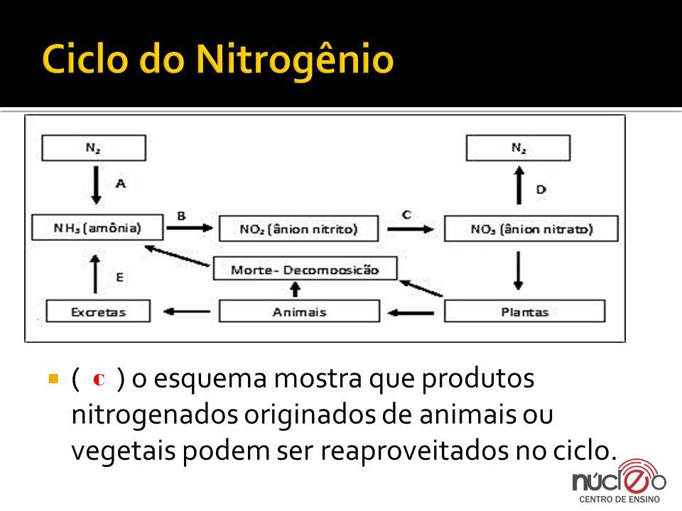 Ciclo do Nitrogênio ( ) o esquema mostra que produtos nitrogenados originados de animais ou vegetais podem ser reaproveitados no ciclo.