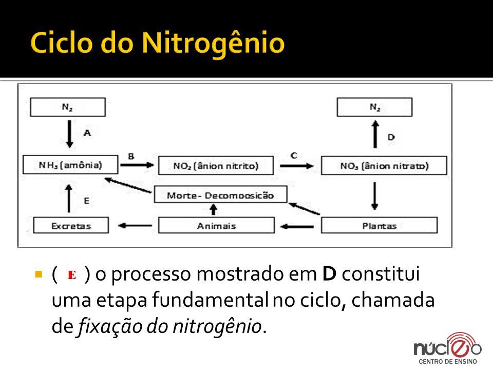 Ciclo do Nitrogênio ( ) o processo mostrado em D constitui uma etapa fundamental no ciclo, chamada de fixação do nitrogênio.