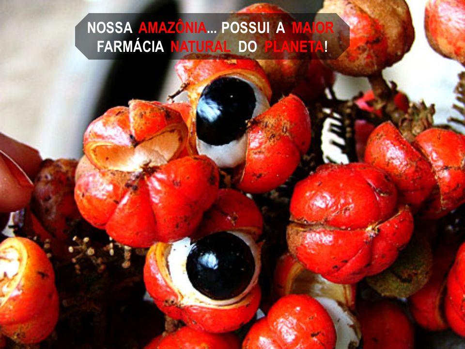 NOSSA AMAZÔNIA... POSSUI A MAIOR FARMÁCIA NATURAL DO PLANETA!