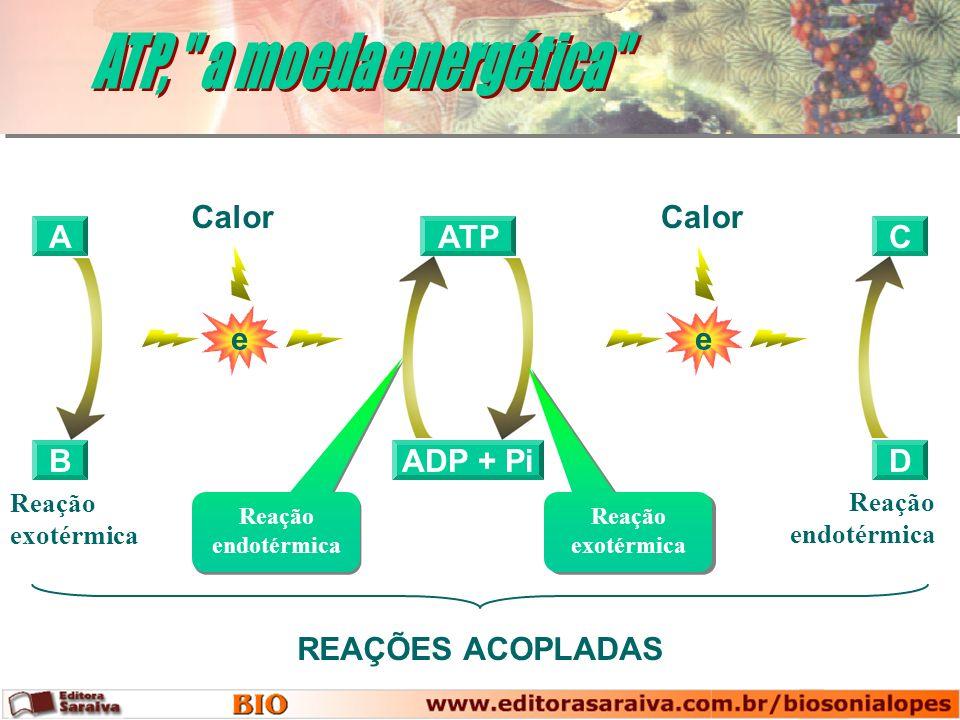 ATP, a moeda energética e Calor e Calor A ADP + Pi ATP C B D