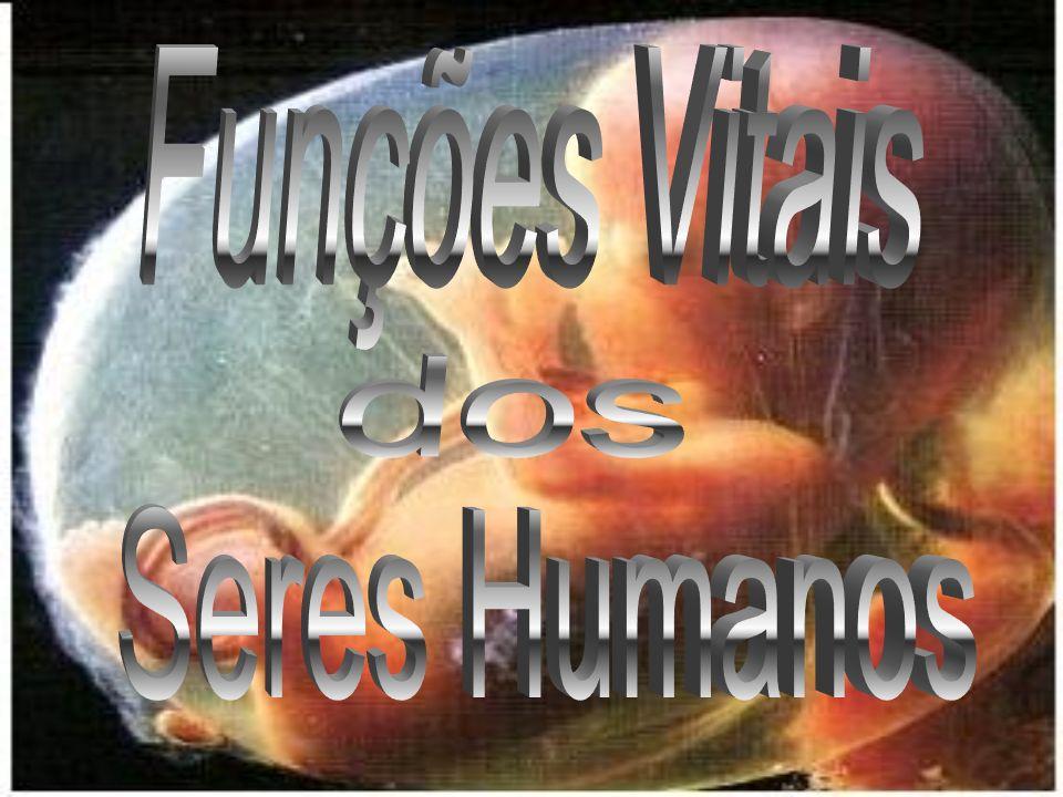 Funções Vitais dos Seres Humanos