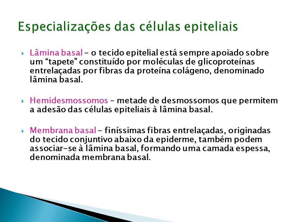 Especializações das células epiteliais
