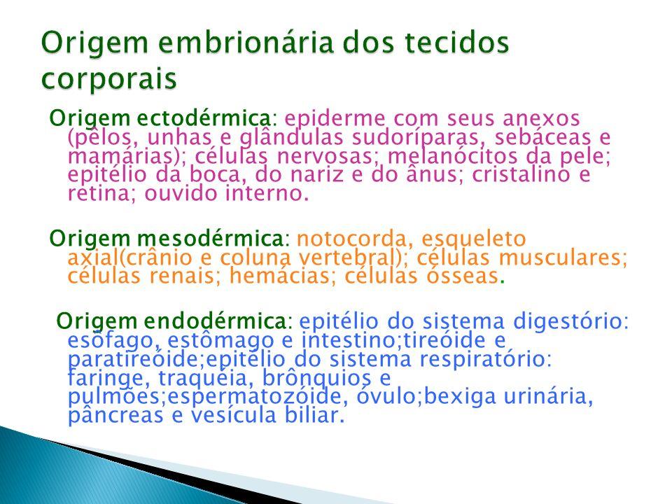 Origem embrionária dos tecidos corporais
