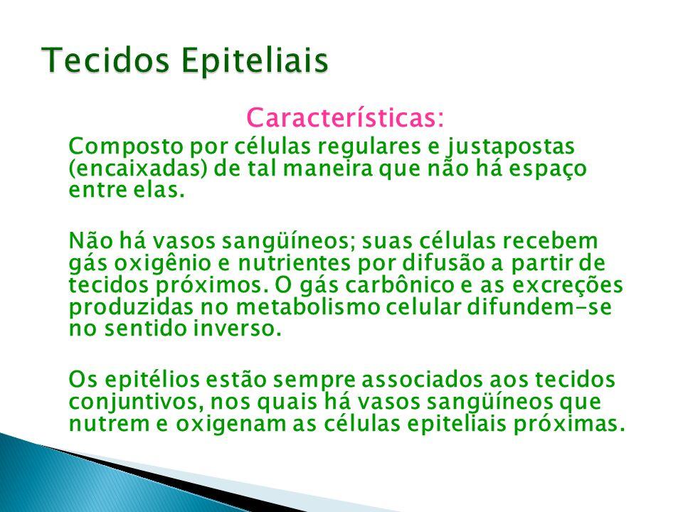 Tecidos Epiteliais Características: