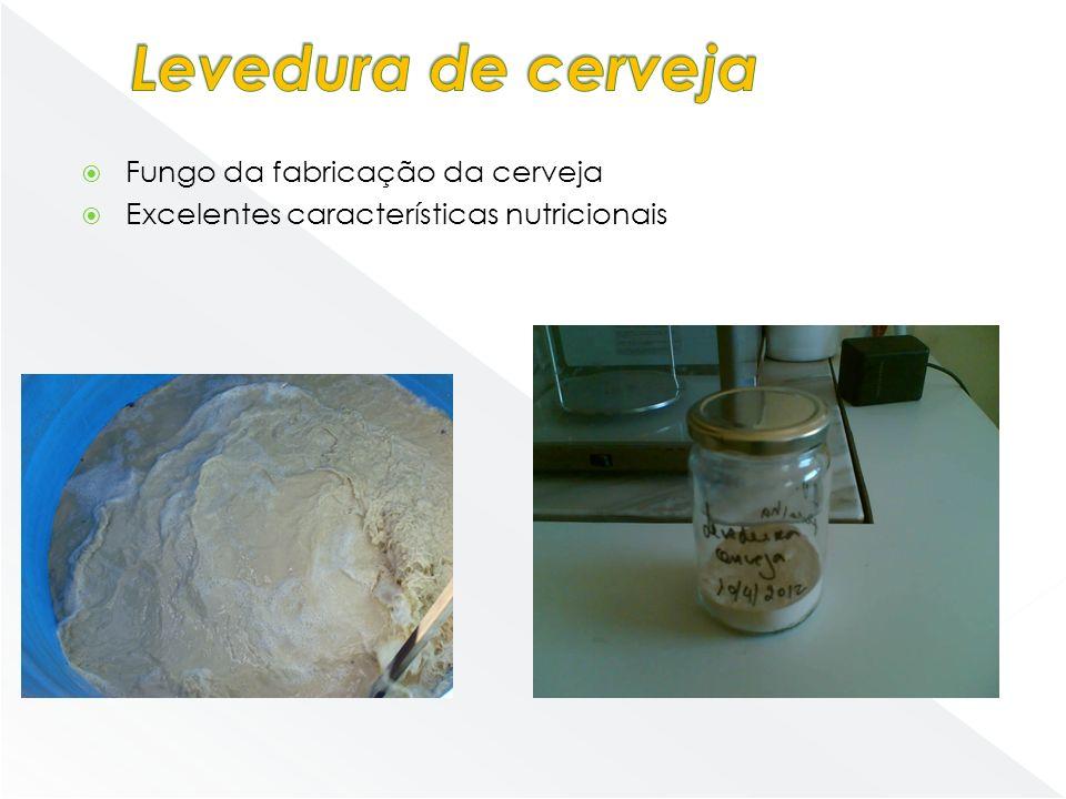 Levedura de cerveja Fungo da fabricação da cerveja