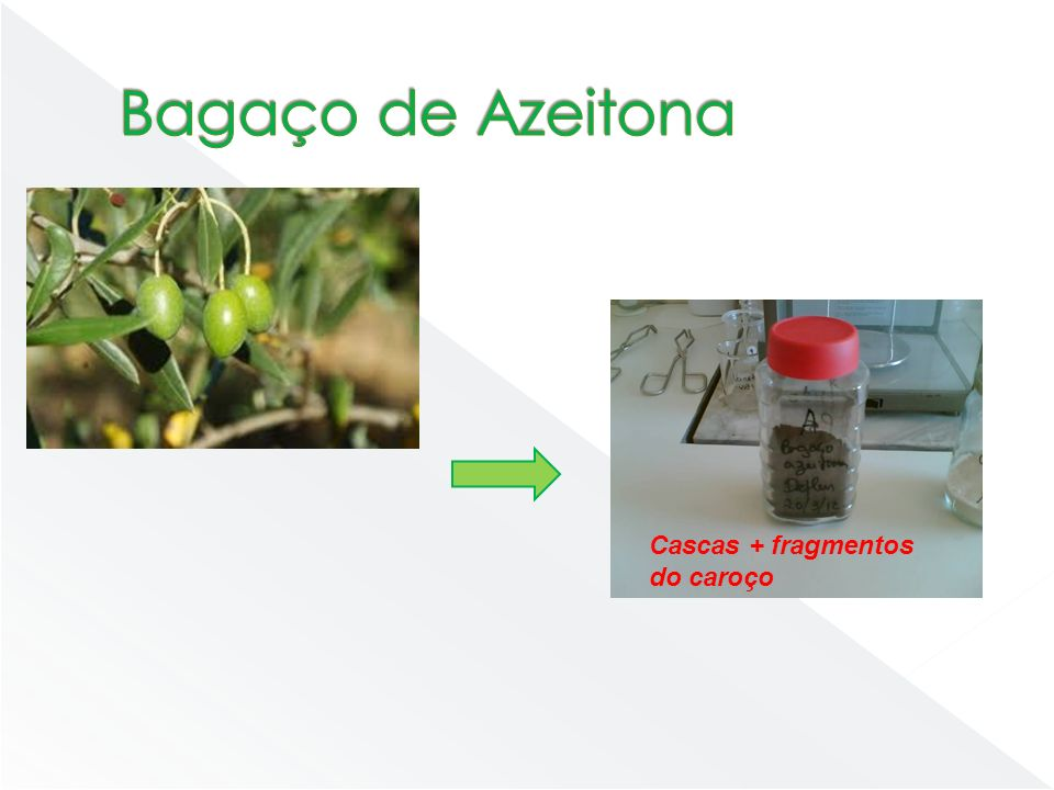 Bagaço de Azeitona Cascas + fragmentos do caroço