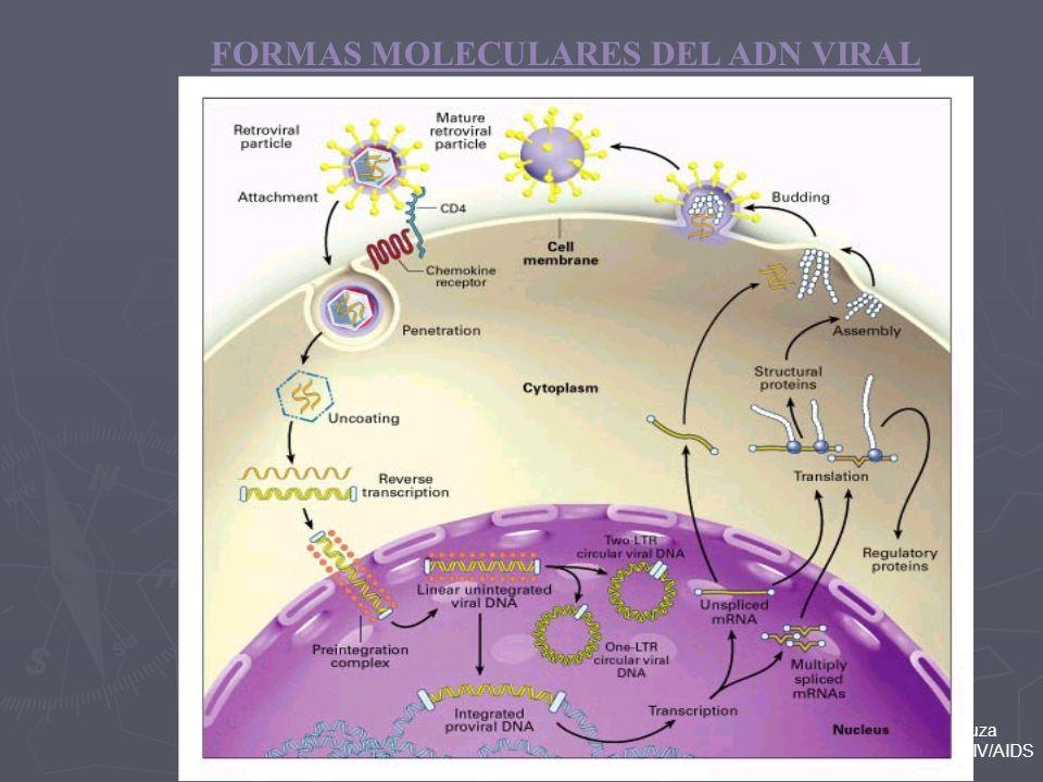 FORMAS MOLECULARES DEL ADN VIRAL