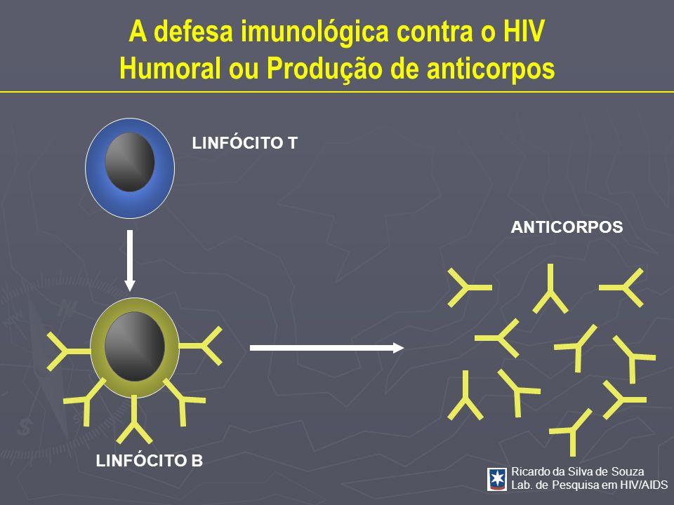 A defesa imunológica contra o HIV Humoral ou Produção de anticorpos