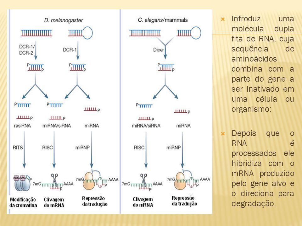 Introduz uma molécula dupla fita de RNA, cuja sequência de aminoácidos combina com a parte do gene a ser inativado em uma célula ou organismo;