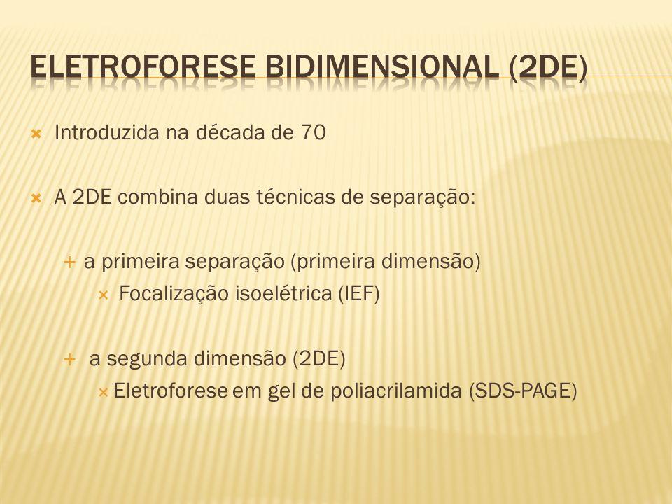 Eletroforese Bidimensional (2DE)