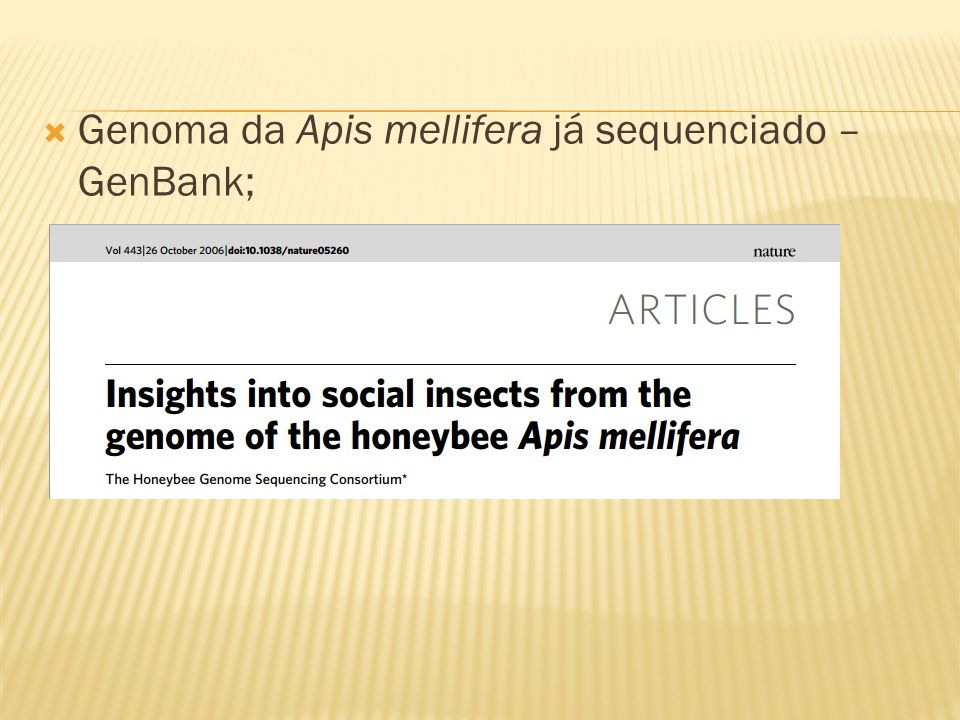 Genoma da Apis mellifera já sequenciado – GenBank;