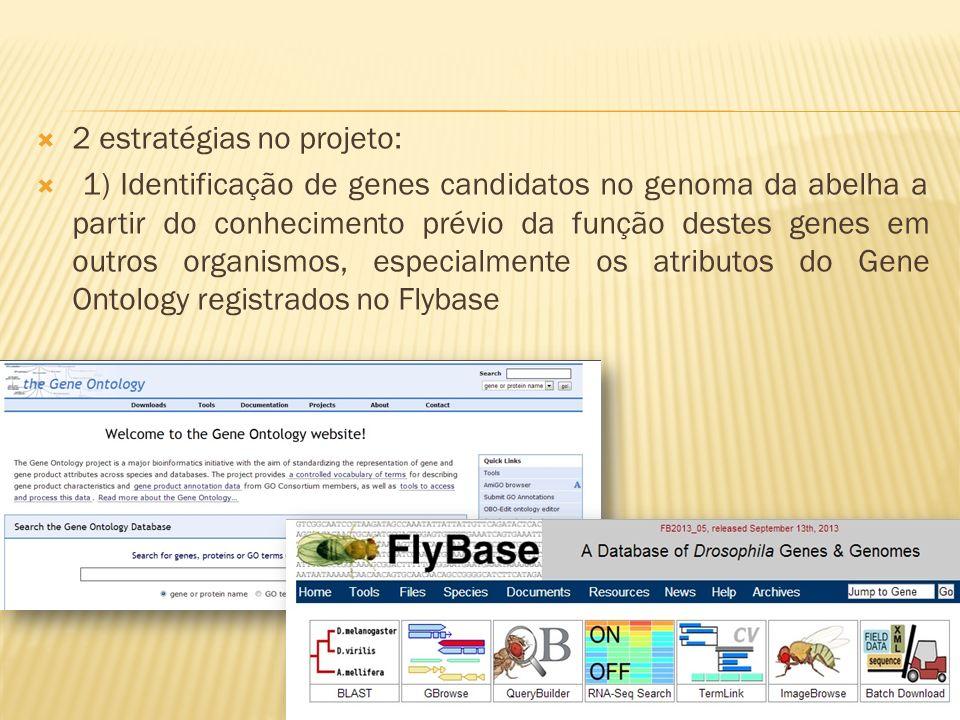 2 estratégias no projeto: