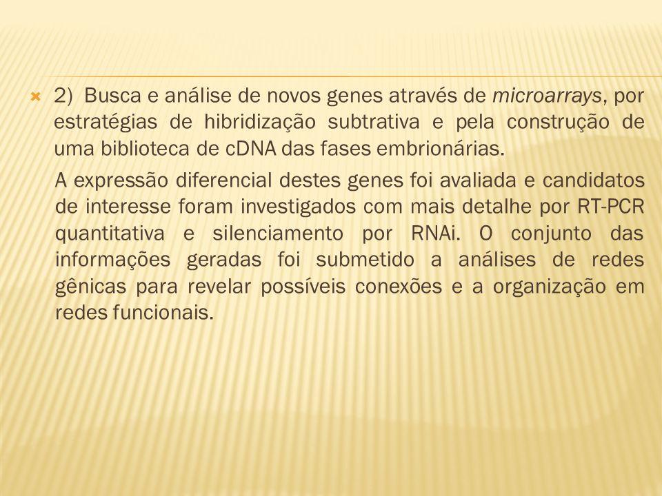 2) Busca e análise de novos genes através de microarrays, por estratégias de hibridização subtrativa e pela construção de uma biblioteca de cDNA das fases embrionárias.