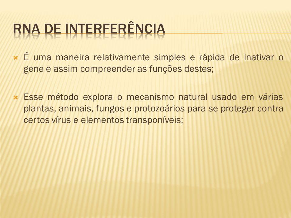 Rna de interferênciA É uma maneira relativamente simples e rápida de inativar o gene e assim compreender as funções destes;