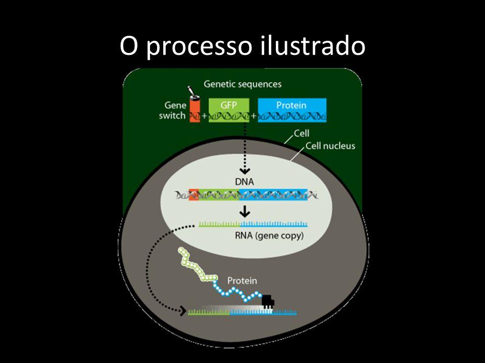 O processo ilustrado