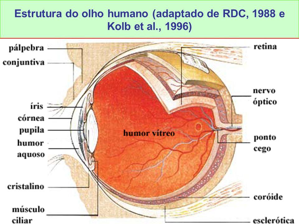 Estrutura do olho humano (adaptado de RDC, 1988 e Kolb et al., 1996)