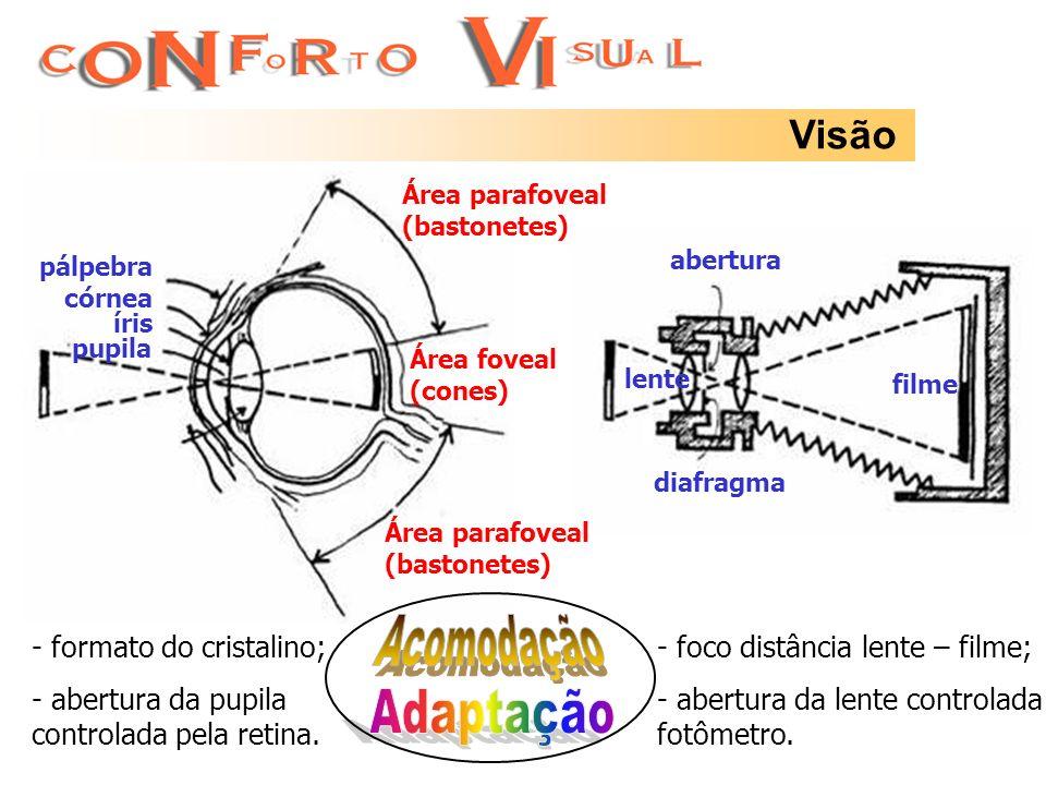 Acomodação Adaptação Visão formato do cristalino;