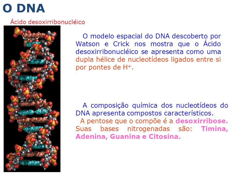 O DNA Ácido desoxirribonucléico.