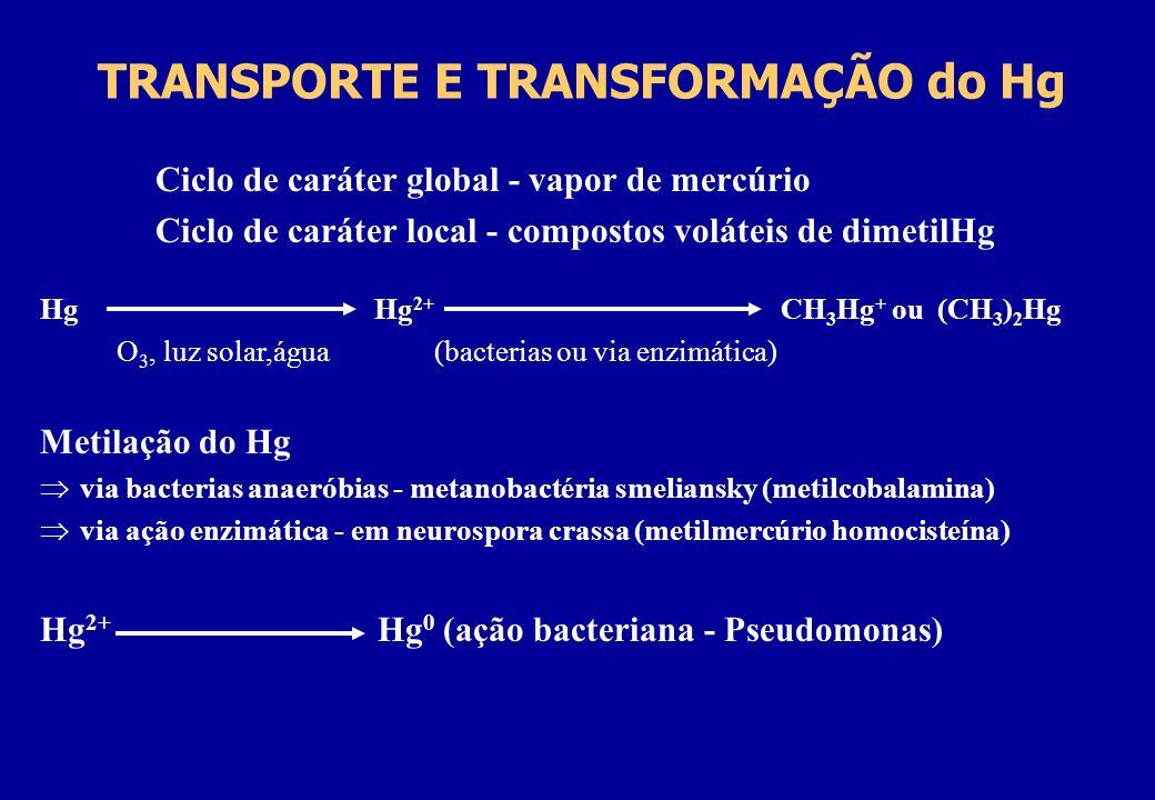 TRANSPORTE E TRANSFORMAÇÃO do Hg