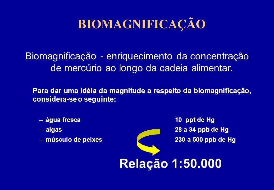BIOMAGNIFICAÇÃO Biomagnificação - enriquecimento da concentração de mercúrio ao longo da cadeia alimentar.