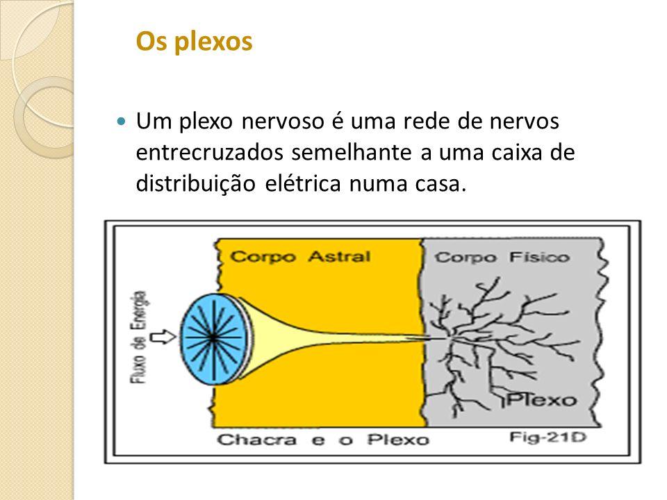 Os plexos Um plexo nervoso é uma rede de nervos entrecruzados semelhante a uma caixa de distribuição elétrica numa casa.