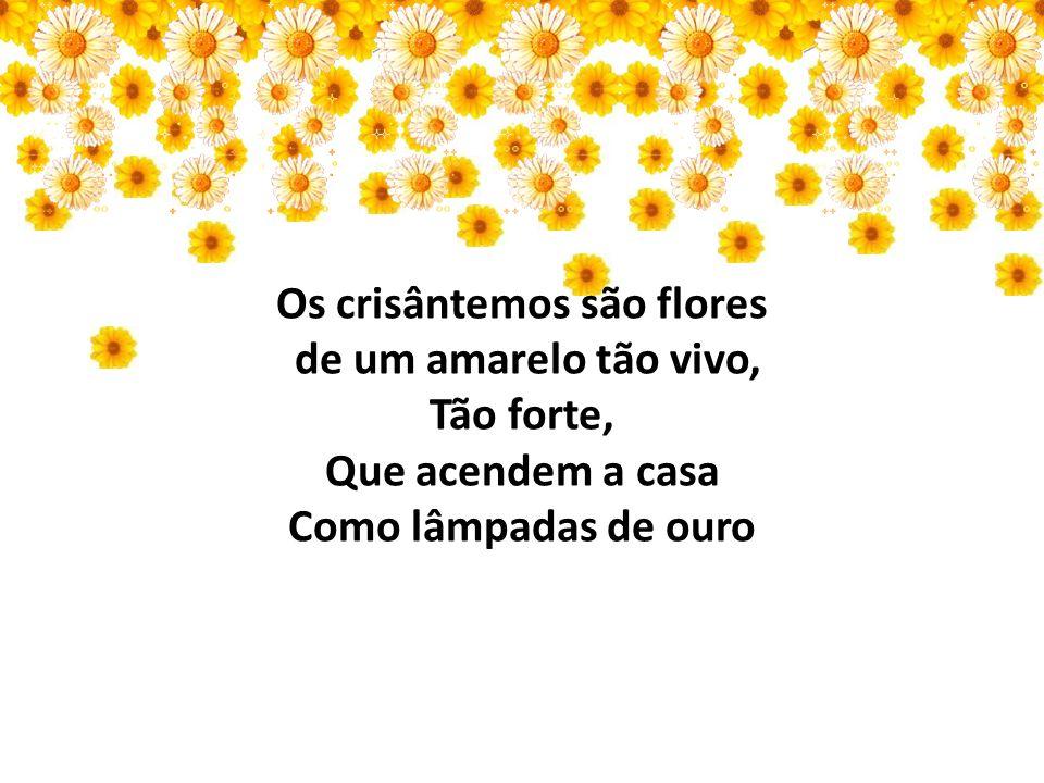 Os crisântemos são flores