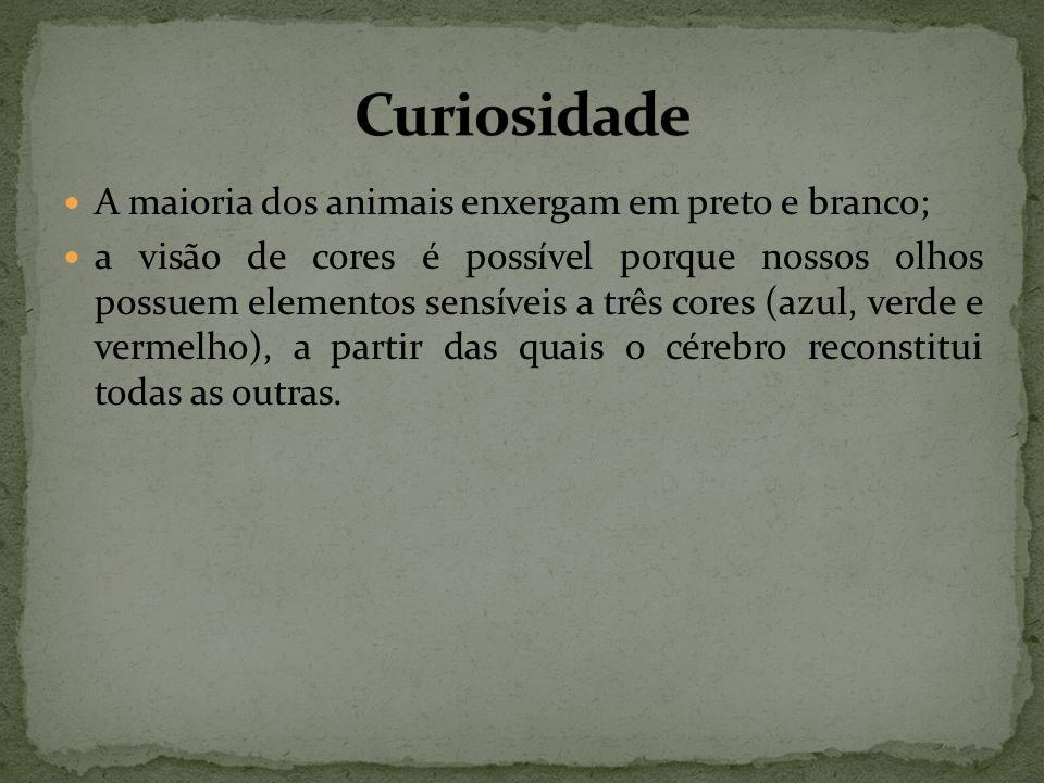 Curiosidade A maioria dos animais enxergam em preto e branco;