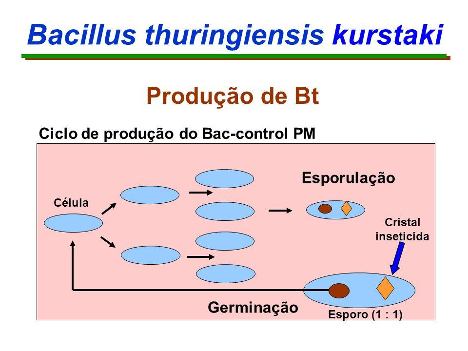 Bacillus thuringiensis kurstaki