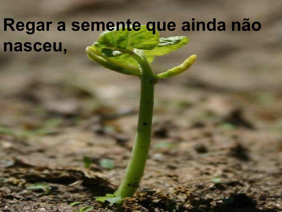Regar a semente que ainda não nasceu,