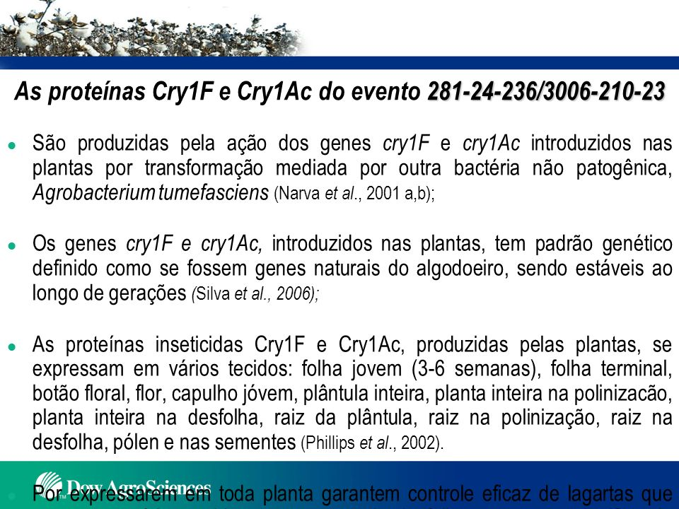 As proteínas Cry1F e Cry1Ac do evento 281-24-236/3006-210-23