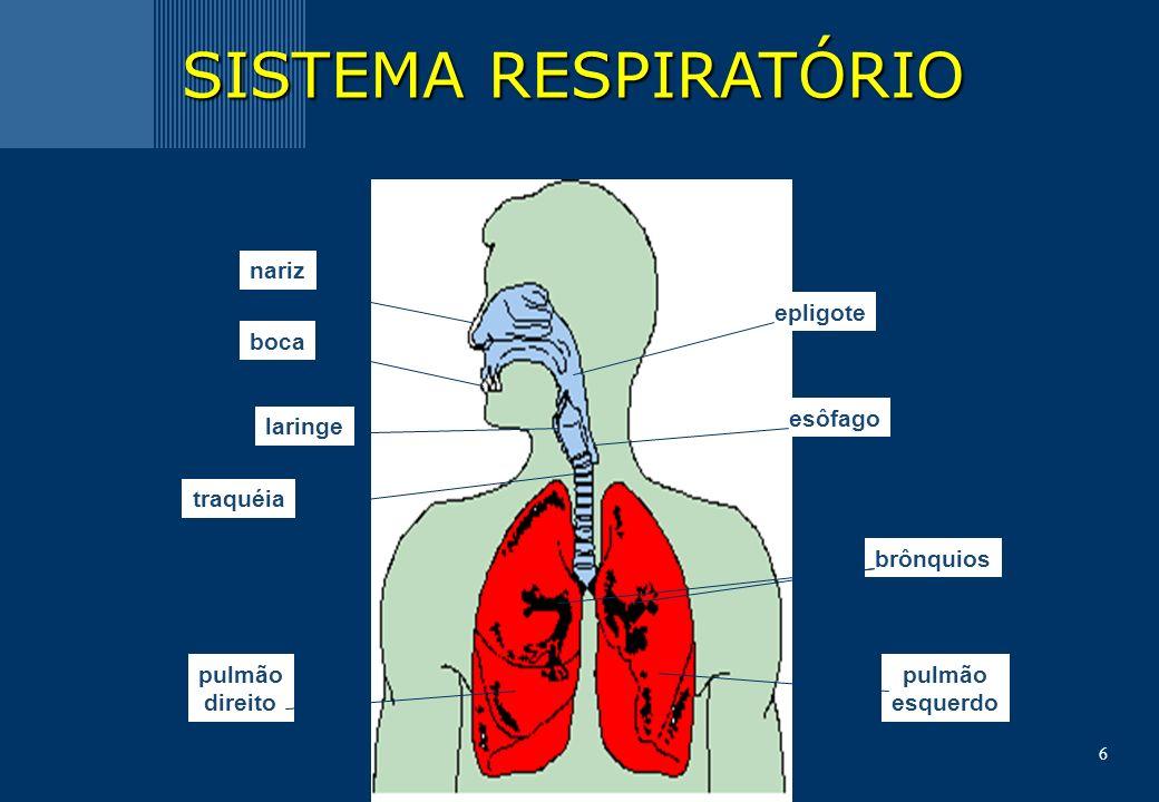 SISTEMA RESPIRATÓRIO nariz epligote boca esôfago laringe traquéia