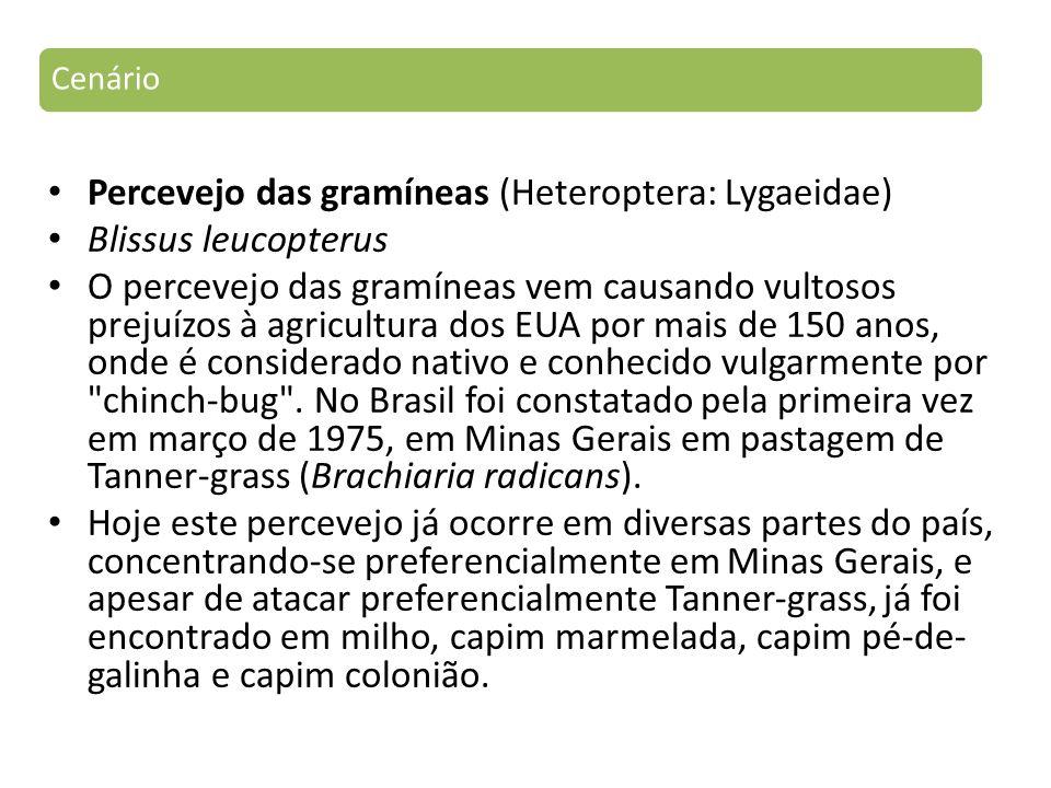 Percevejo das gramíneas (Heteroptera: Lygaeidae) Blissus leucopterus