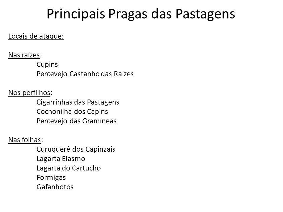 Principais Pragas das Pastagens