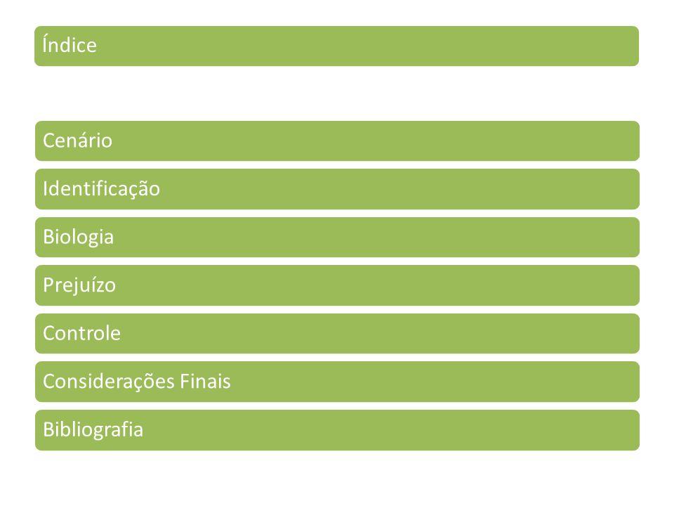 Índice Cenário Identificação Biologia Prejuízo Controle Considerações Finais Bibliografia