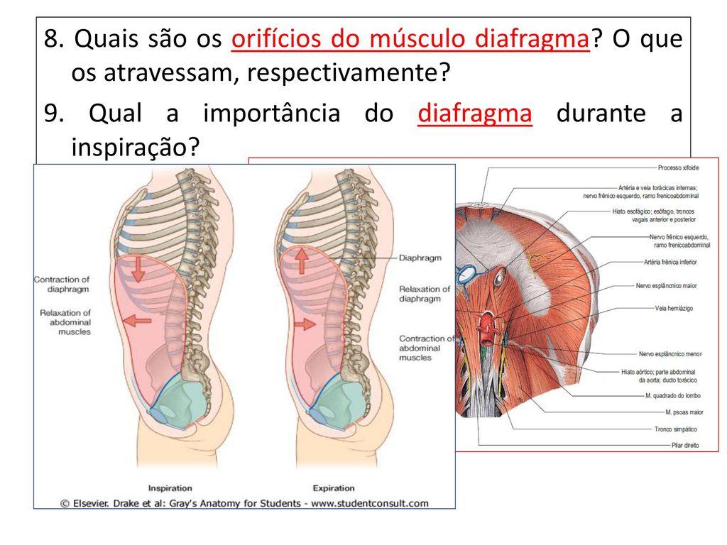 Excepcional Fundamentos De La Anatomía Y La Fisiología Novena ...