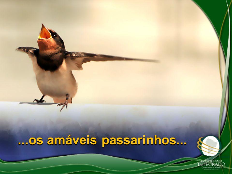 ...os amáveis passarinhos...