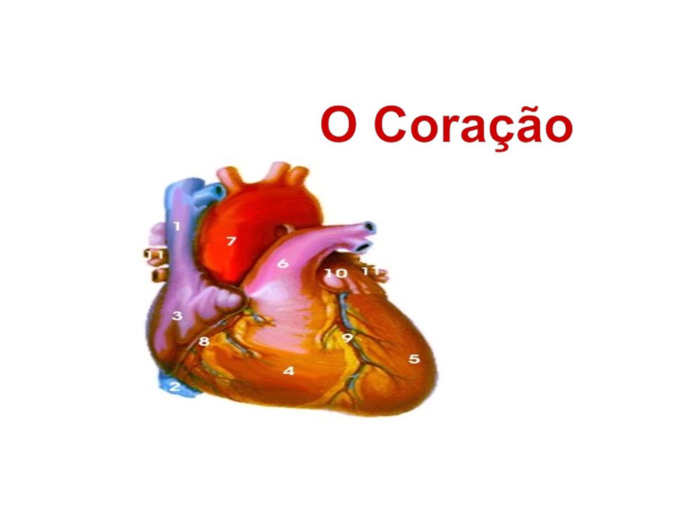 O Coração