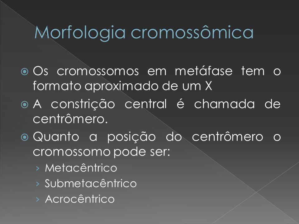 Morfologia cromossômica