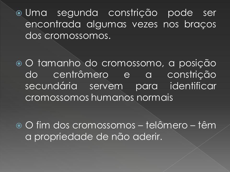 Uma segunda constrição pode ser encontrada algumas vezes nos braços dos cromossomos.