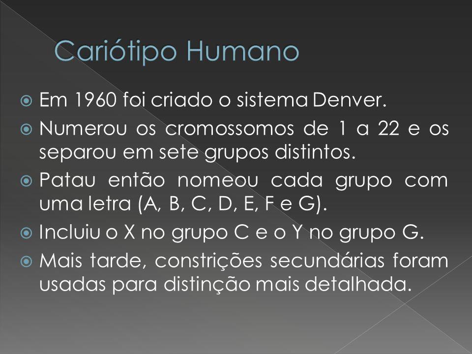Cariótipo Humano Em 1960 foi criado o sistema Denver.