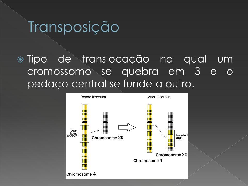 Transposição Tipo de translocação na qual um cromossomo se quebra em 3 e o pedaço central se funde a outro.