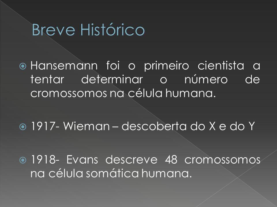 Breve Histórico Hansemann foi o primeiro cientista a tentar determinar o número de cromossomos na célula humana.