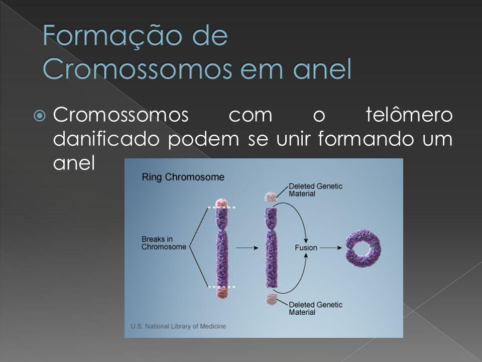 Formação de Cromossomos em anel