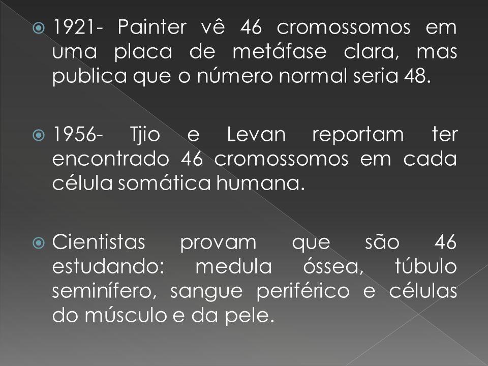 1921- Painter vê 46 cromossomos em uma placa de metáfase clara, mas publica que o número normal seria 48.