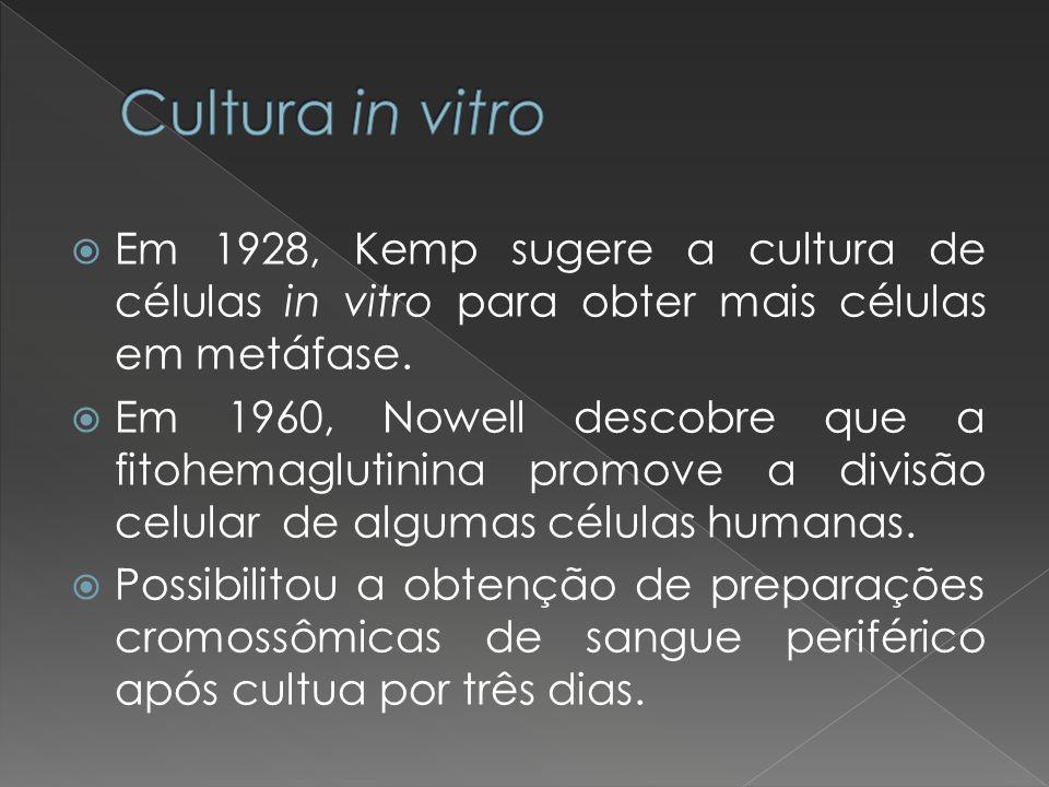 Cultura in vitro Em 1928, Kemp sugere a cultura de células in vitro para obter mais células em metáfase.